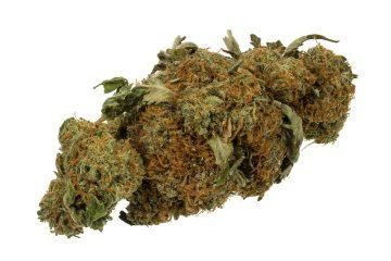 Cannabis - Gras